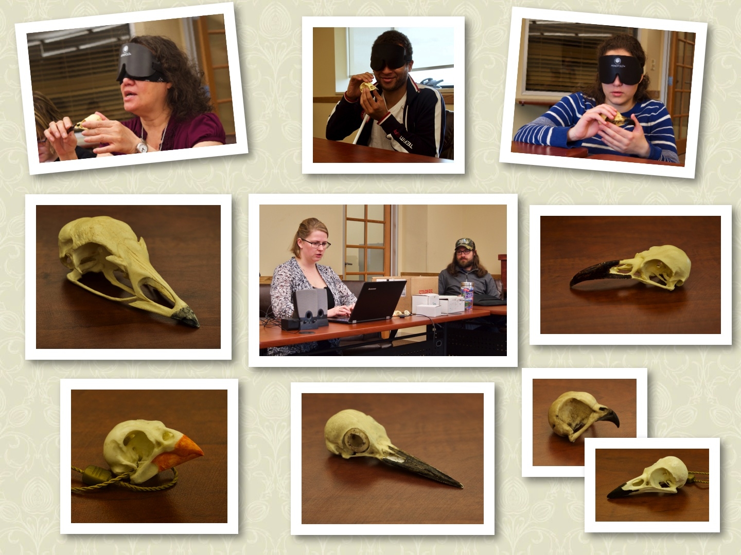 Top row: Blanca, Chaz and CC looking at skulls, Center row: Eagle skull, Allie and Tyler playing bird sounds on the computer, Raven skull, Bottom row: Cardinal skull, Northern Flicker skull, Turkey skull and Blue Jay skull