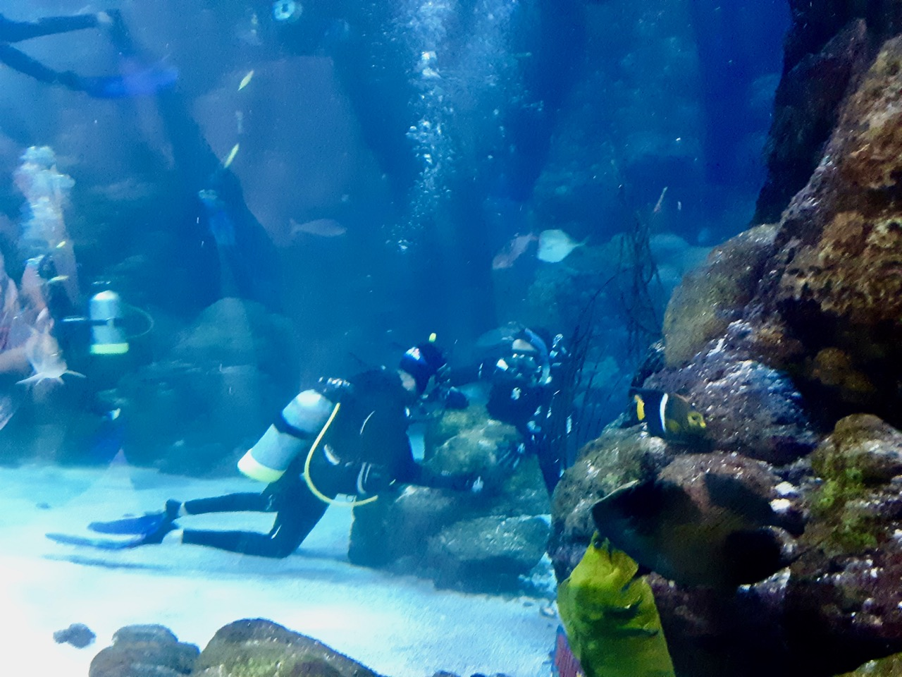 Brian and Jodi Scuba Diving at the Denver Aquarium