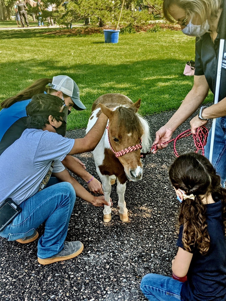 Will looks at Love Bug, a miniature horse.